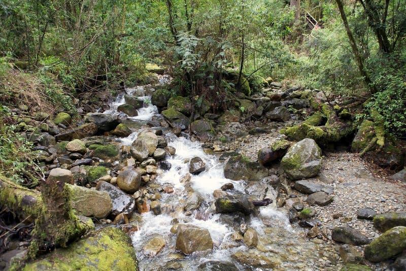 Vicente Perez Rosales National Park, Chile foto de archivo libre de regalías
