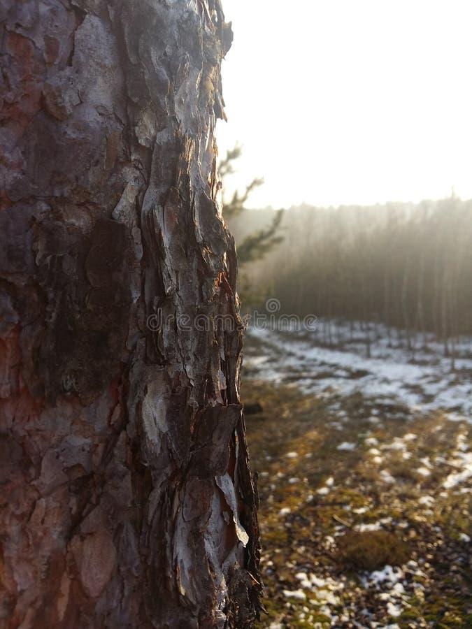 Vicino all'albero immagini stock
