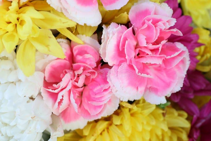 Vicino su, bei fiori, rosa, sfondo bianco, giallo, naturale immagini stock