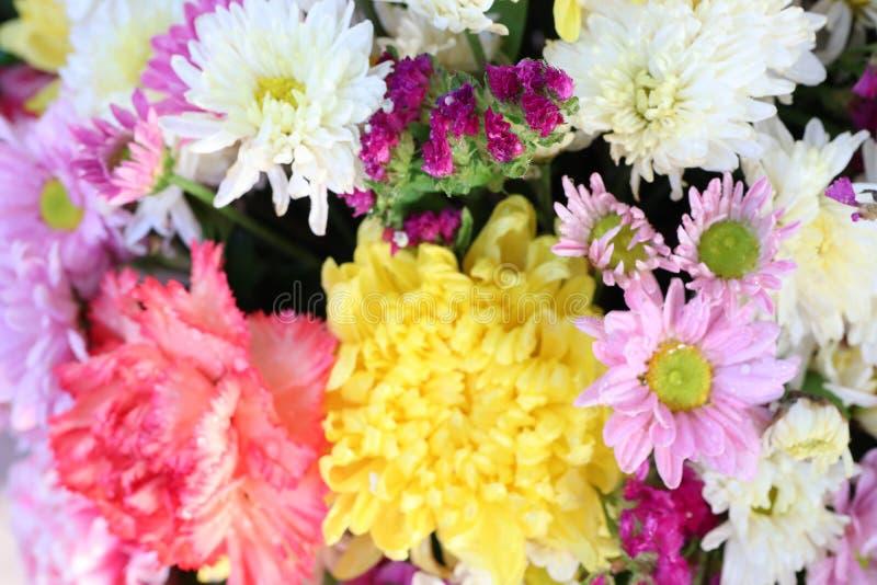 Vicino su, bei fiori, rosa, sfondo bianco, giallo, naturale immagine stock
