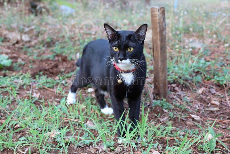 Vicino su, gatto nero sveglio che cammina nel giardino immagine stock