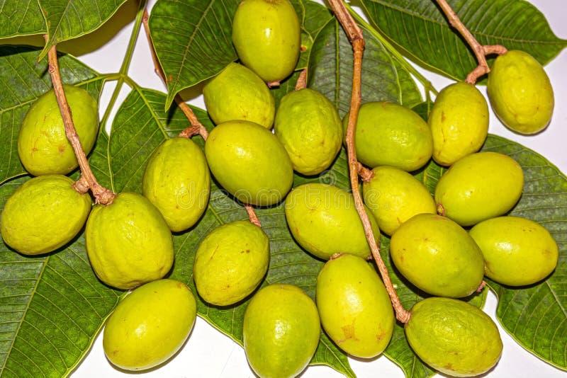 Vicino su sparato dei frutti di spondias dulcis con le foglie verdi su fondo bianco immagine stock libera da diritti