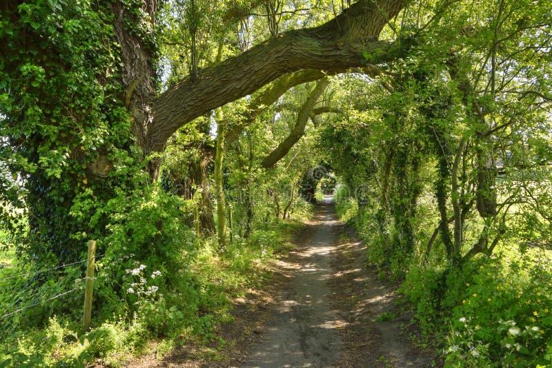 Vicolo affascinante del paese dell'Inghilterra orientale fotografia stock libera da diritti