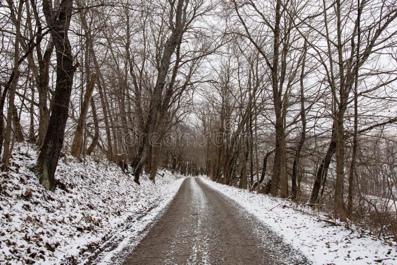 Vicolo alberato di inverno fotografia stock libera da diritti