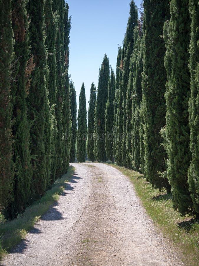Vicolo allineato con gli alberi di cipresso in Toscana immagini stock libere da diritti