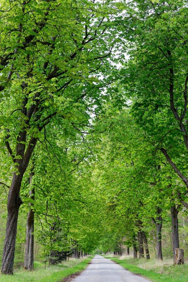 Vicolo corrente dell'albero della depressione del sentiero per pedoni immagine stock
