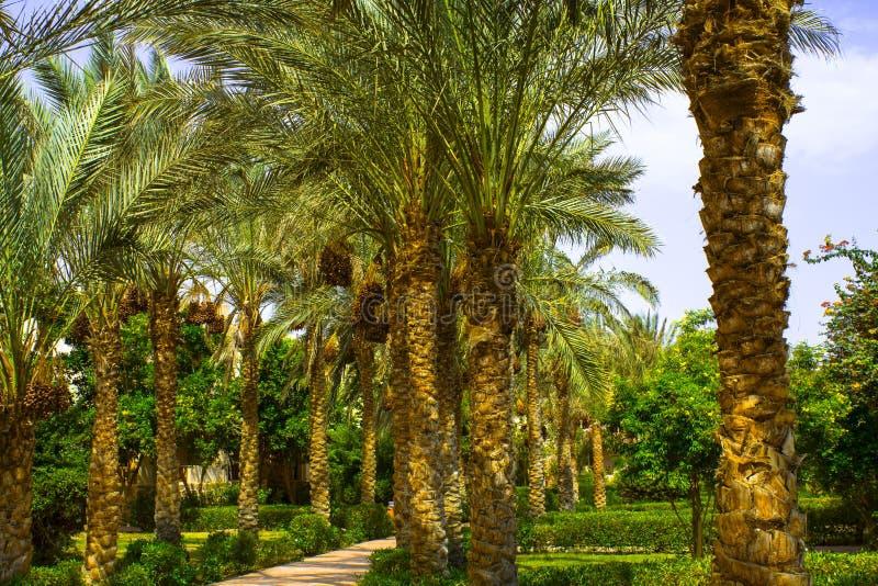 Vicolo dalle palme agli hotel nell'Egitto, Africa immagine stock libera da diritti