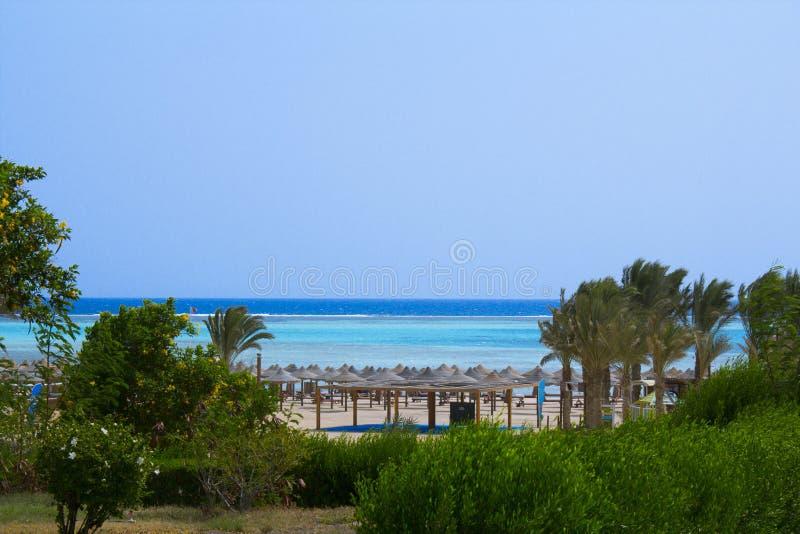 Vicolo dalle palme agli hotel nell'Egitto, Africa fotografia stock libera da diritti