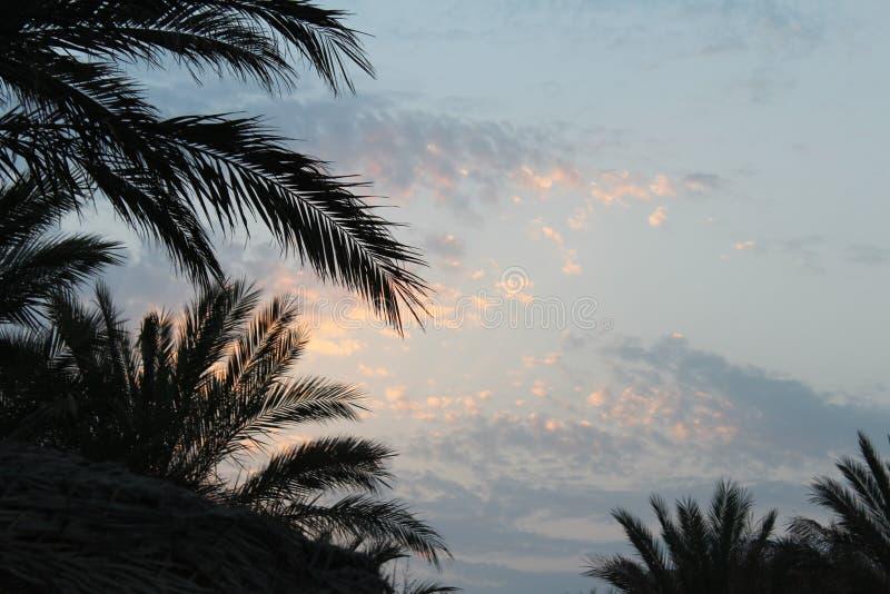 Vicolo dalle palme agli hotel nell'Egitto, Africa immagine stock