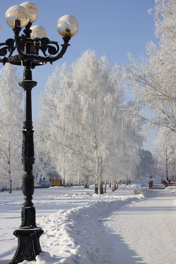 Vicolo degli alberi di betulla di inverno fotografie stock libere da diritti