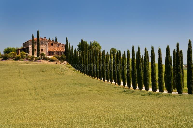 Vicolo del Cypress fotografia stock