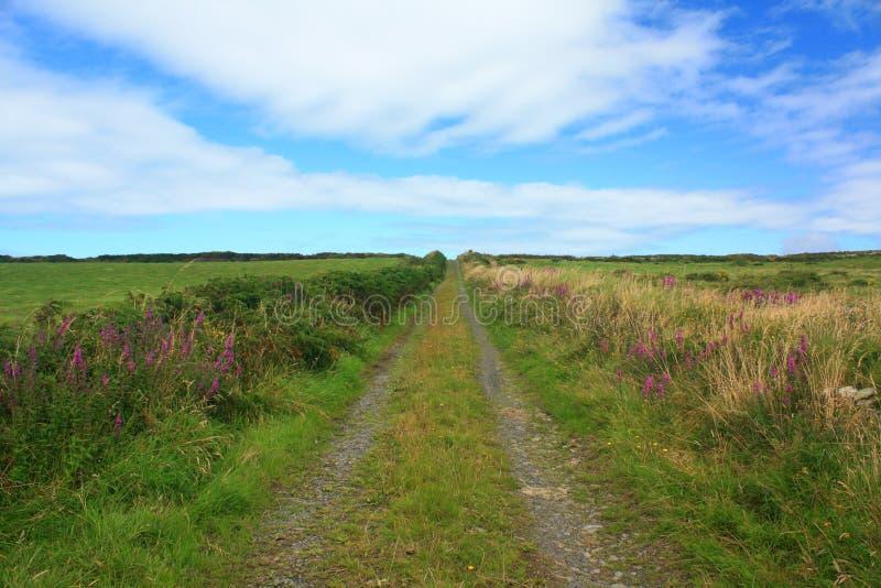 Vicolo del paese, Irlanda immagini stock libere da diritti