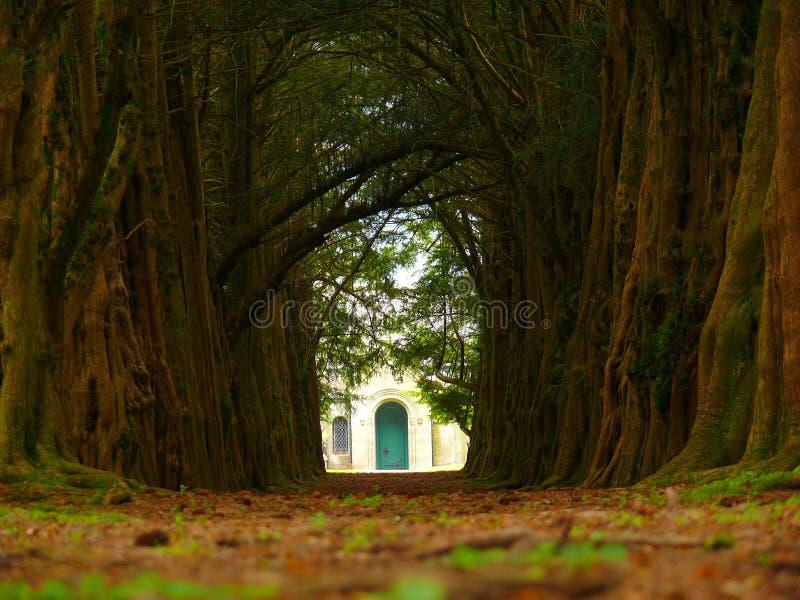Vicolo del Yew immagine stock