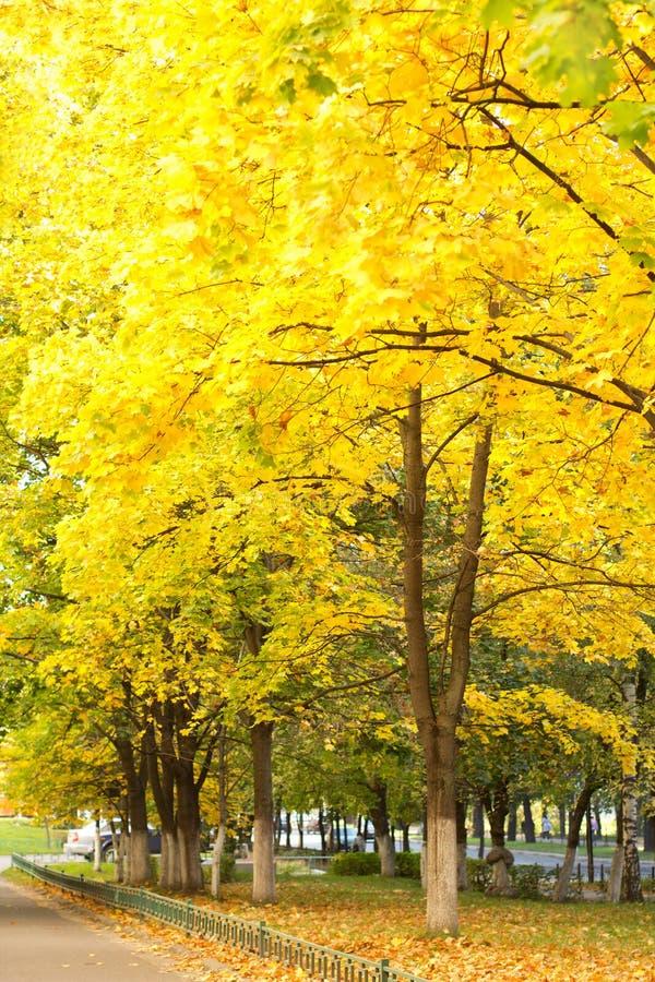 Vicolo dell'acero di autunno immagini stock