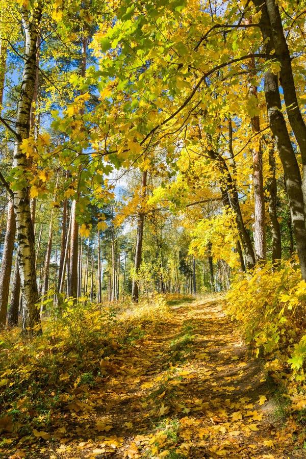 Vicolo dell'acero un giorno soleggiato di autunno immagine stock libera da diritti