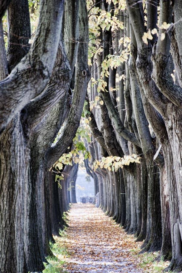 Vicolo dell'albero a Lucca fotografia stock libera da diritti