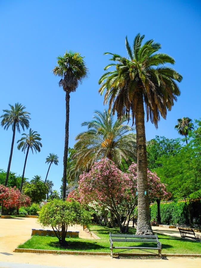 Vicolo dell'oleandro e della palma fotografie stock libere da diritti