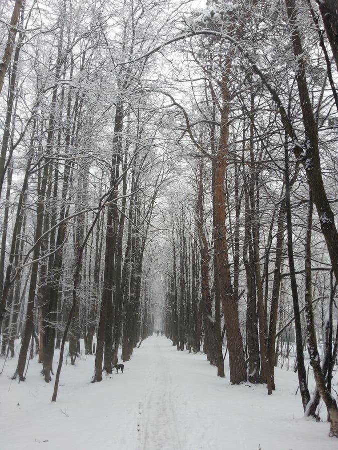 Vicolo della neve fotografie stock libere da diritti