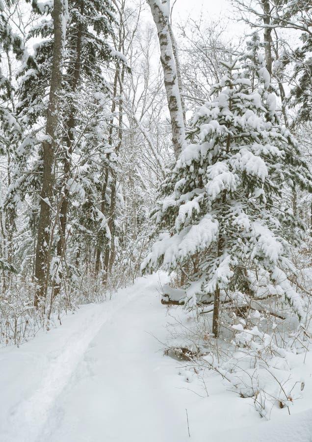 Vicolo della neve, foresta fotografie stock