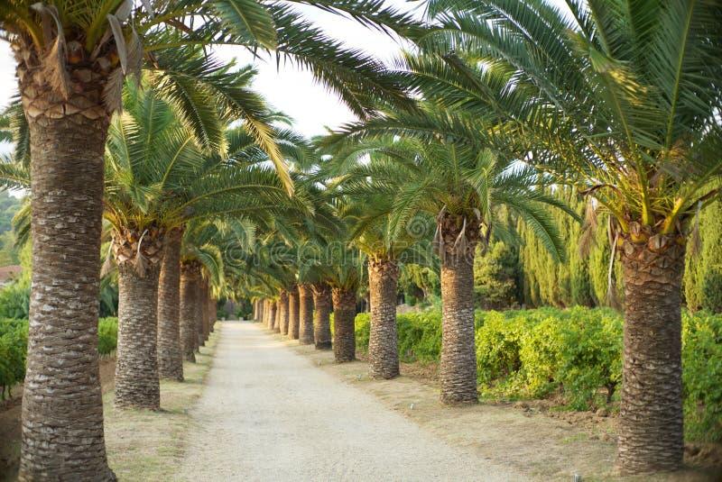 Vicolo della palma fotografie stock libere da diritti
