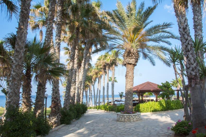 Vicolo della palma in Protaras, Cipro immagini stock libere da diritti