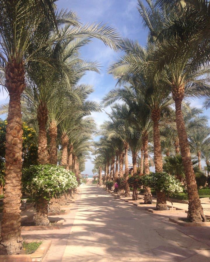 Vicolo delle palme in un paese tropicale fotografia stock