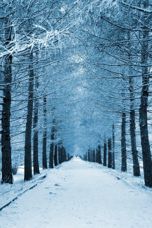 Vicolo dello Snowy fotografia stock libera da diritti