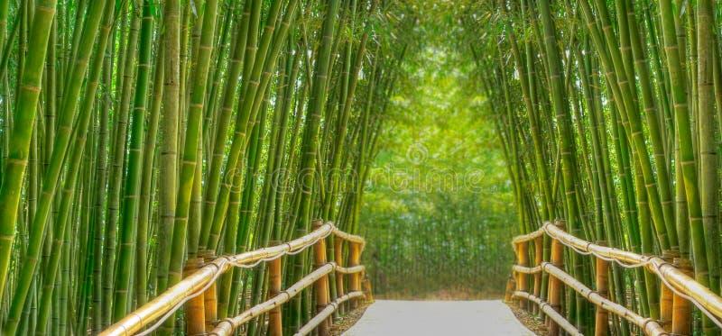 Vicolo di bambù fotografia stock