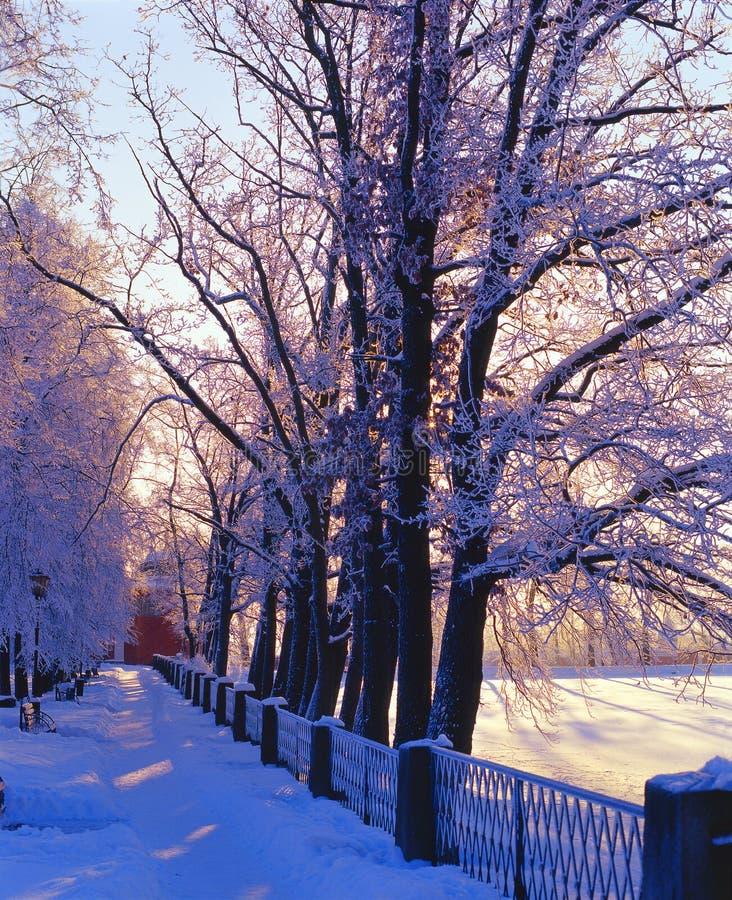 Vicolo di Snowy immagine stock