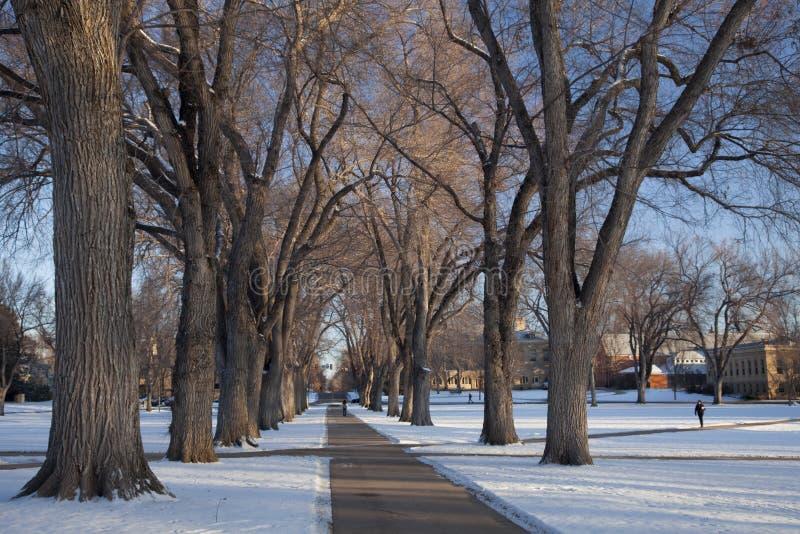 Vicolo di vecchi alberi di olmo al campus universitario fotografie stock libere da diritti