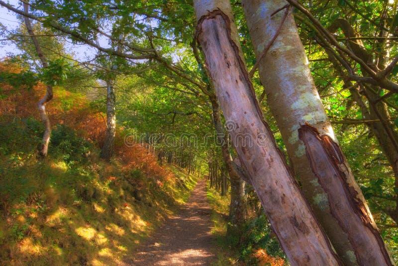 Vicolo frondoso vicino al ponte Dartmoor di Fingle immagine stock