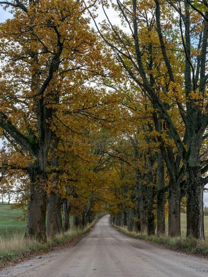 Vicolo grande e vecchio dell'albero immagini stock libere da diritti