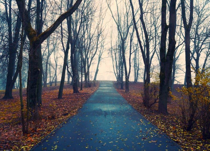 Vicolo nebbioso del parco di autunno di paesaggio di autunno con gli alberi e le foglie di autunno arancio cadute asciutte fotografia stock libera da diritti