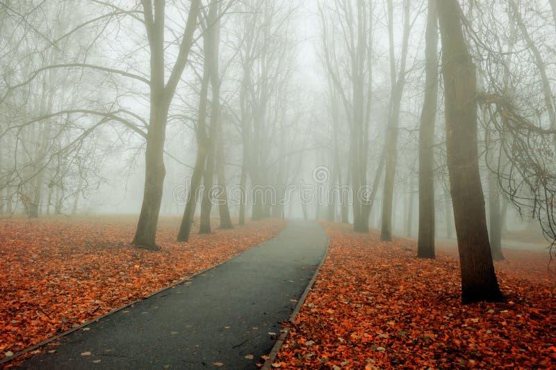 Vicolo nebbioso del parco di autunno di paesaggio di autunno con gli alberi nudi e le foglie di autunno variopinte cadute fotografia stock