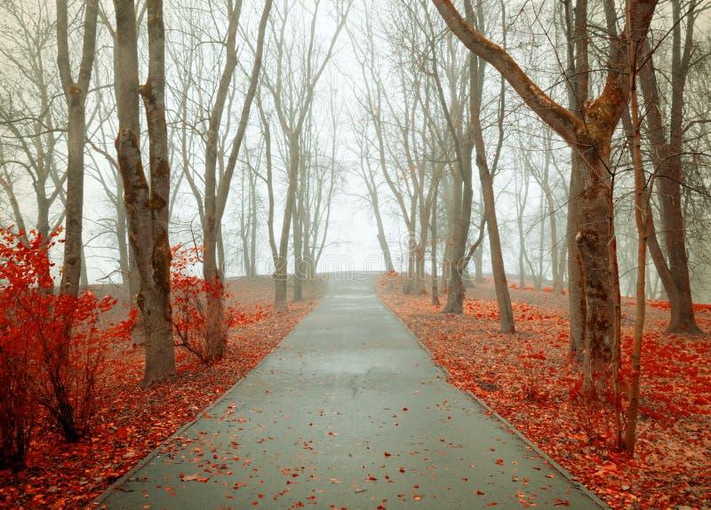 Vicolo nebbioso del parco di autunno di paesaggio di autunno con gli alberi nudi di novembre e le foglie di autunno arancio cadut immagine stock libera da diritti