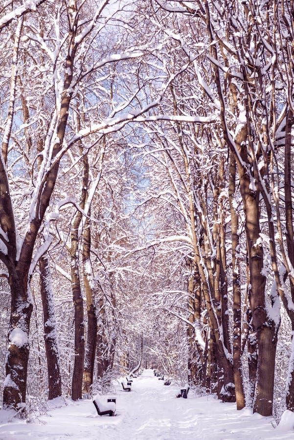 Vicolo nel tempo di Snowy della foresta di inverno Banchi ed alberi nella neve fotografia stock