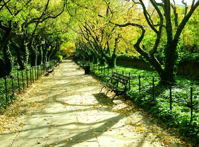 Vicolo Tree-lined in primavera immagine stock libera da diritti
