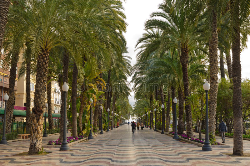 Vicolo tropicale della palma a Alicante, Spagna fotografia stock libera da diritti