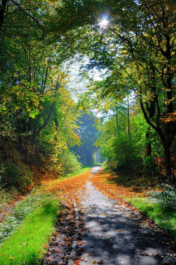 Vicolo verde ombreggiato misterioso con gli alberi nel parco a Fulda, Assia, Germania immagini stock
