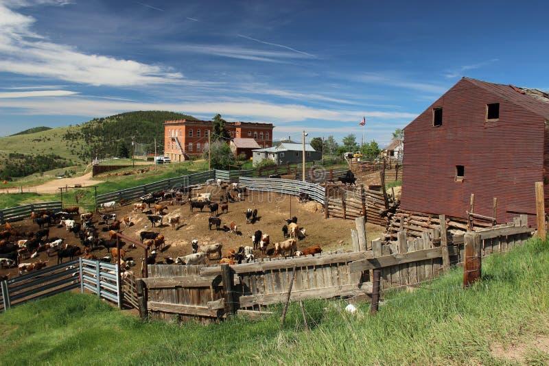 Victor Colorado Cattle Yards arkivbilder