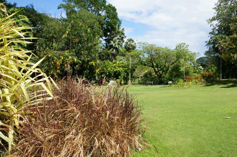 Victoria Botanical Gardens (Mont Fleuri Botanical Gardens Seychelles) photos libres de droits