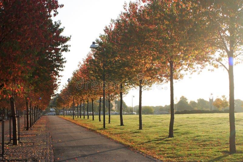 Victoria fácil confinada por los árboles con colores del otoño fotos de archivo