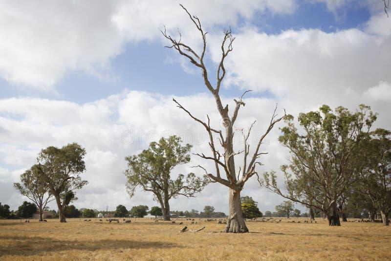 Victoriaans Landelijk Landschap royalty-vrije stock afbeeldingen