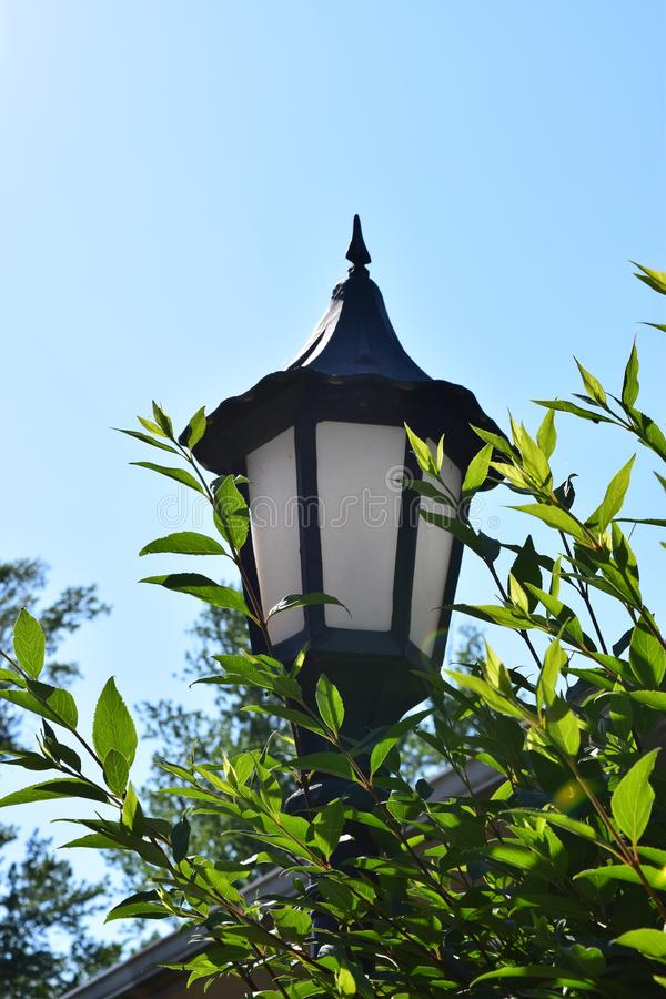 Victorian lamp surrounded by leafy green foilage during Spring. And a hint of rooftop royalty free stock images