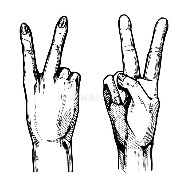 Victory hand symbol. Vector illustration of Victory hand symbol with 2 fingers wide spread from the front and back & x28;palm& x29; side. Vintage hand drawn or stock illustration