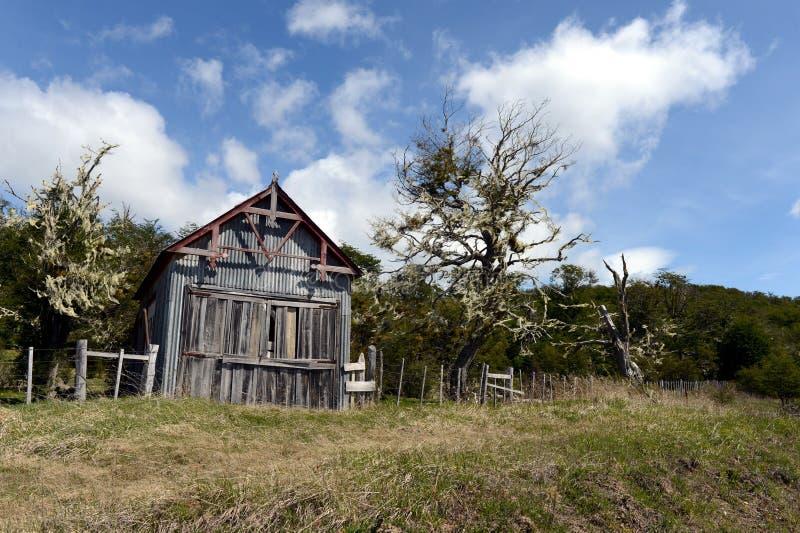 Vicuña del estado del vintage en Tierra del Fuego foto de archivo libre de regalías