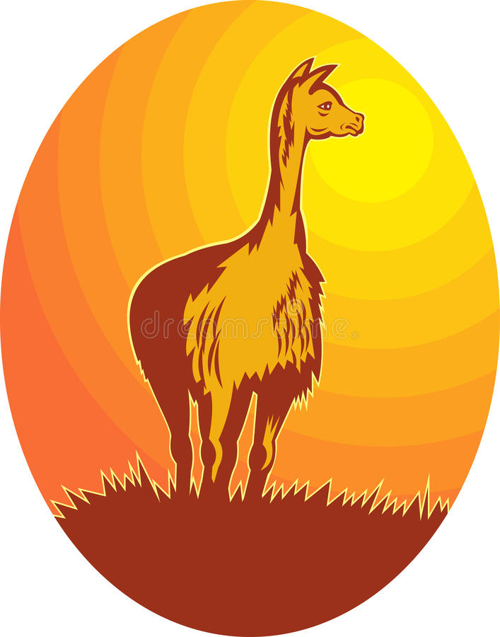 Download Vicuna standing with sun stock illustration. Image of grass - 14394722