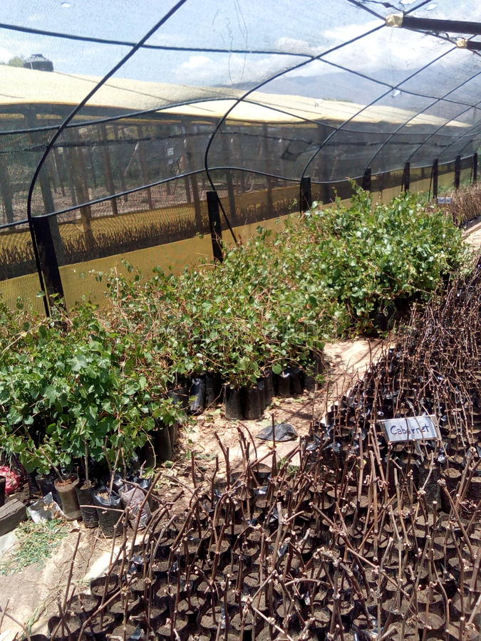 Vid Conservatory. Greenhouse of Vid, in the Valley of the Conception Tarija stock images