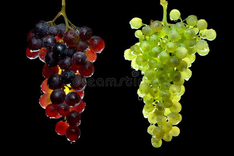 Vid de uvas tres imagen de archivo libre de regalías