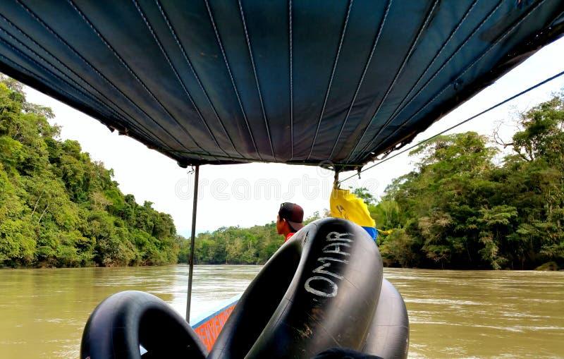 Vid floden i rainforesten arkivbilder